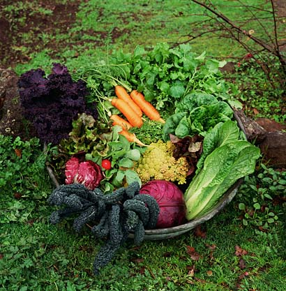 Garden tips additional soil amendments whispers of the - Best vegetable garden soil amendments ...